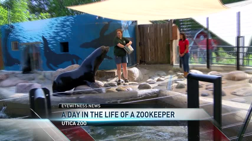 A day in the life of a zookeeper_57904720