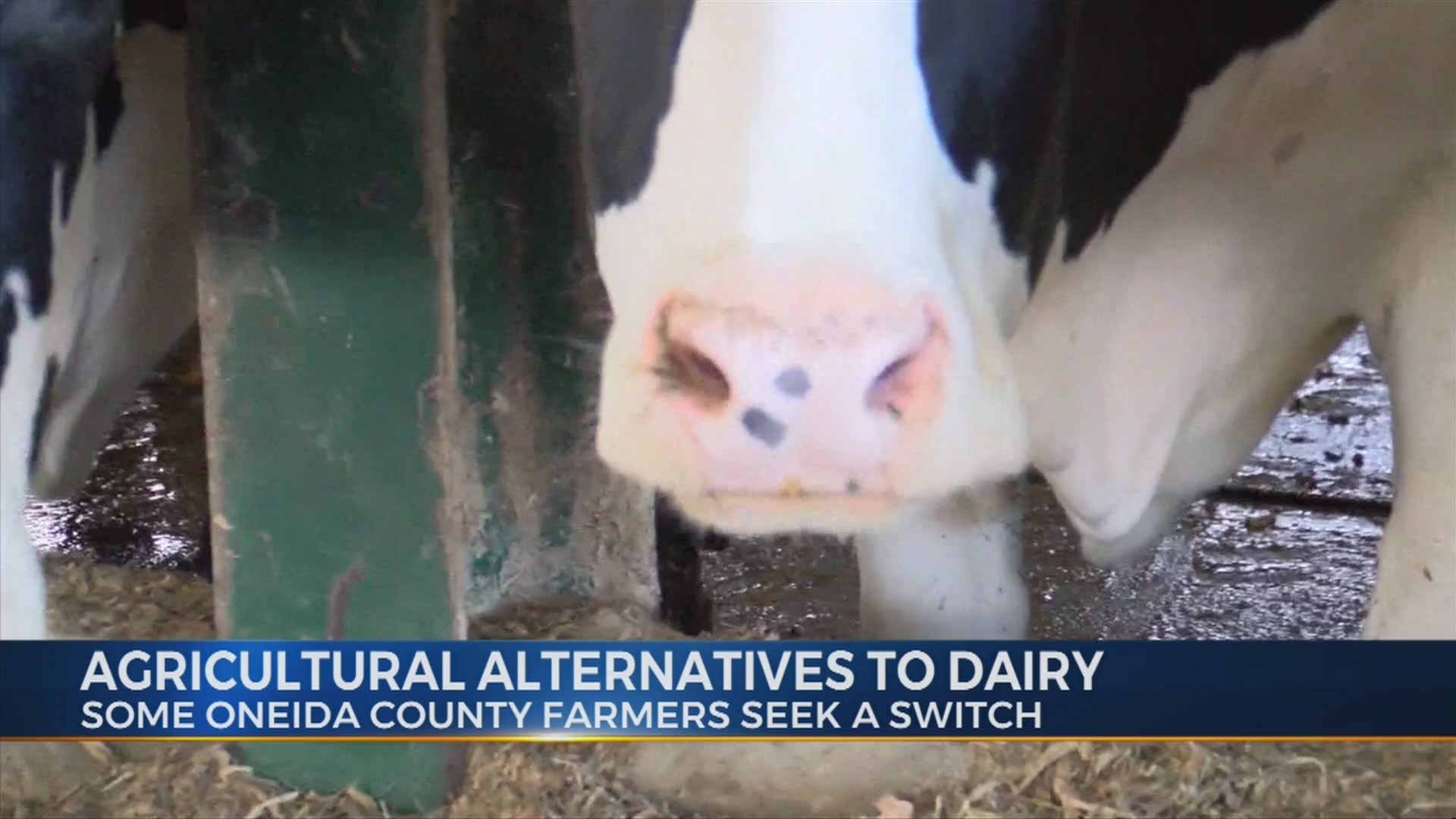 Agricultural_Alternatives_to_Dairy_9_20190129231150