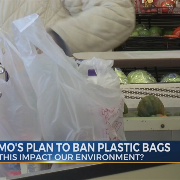How do plastic bags affect our environment?