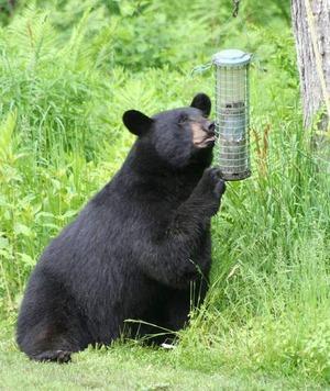 bearbirdfeeder_1553625070167.jpg
