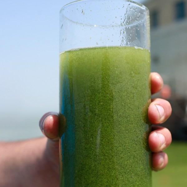 Water_Algae_Blooms_69178-159532.jpg68098468